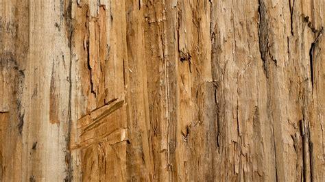 background design wood free images tree branch grain texture plank floor