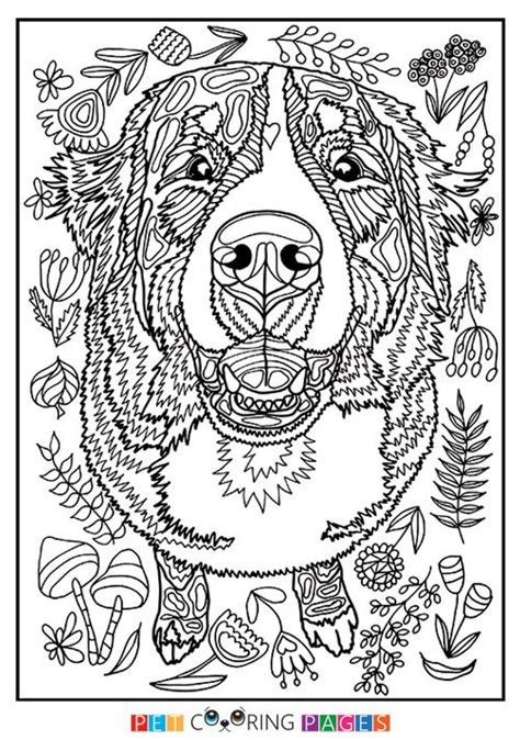 coloring pages of bernese mountain dogs 291 best images about собака dog on pinterest coloring
