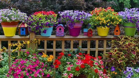 colorful garden plants