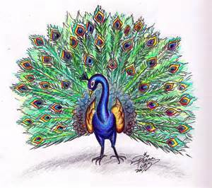 draw a peacock colored by diana huang on deviantart