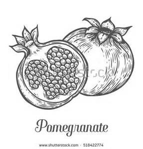 pomegranate stock photos royalty free images amp vectors