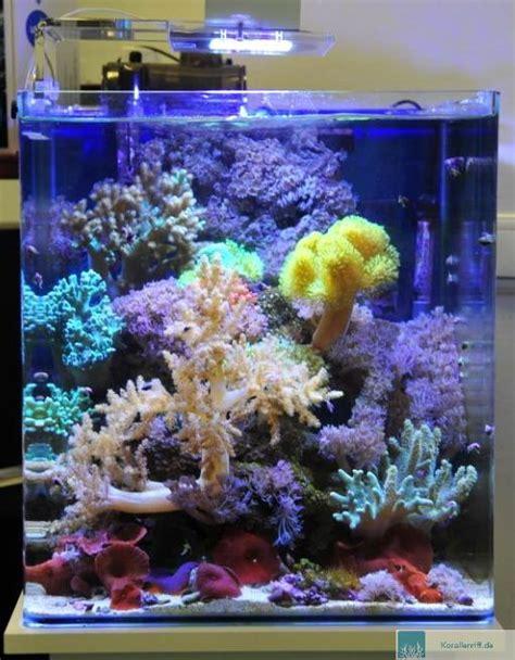 120 liter meerwasseraquarium aquarioscenario asc gibt besatzempfehlungen f 252 r nano