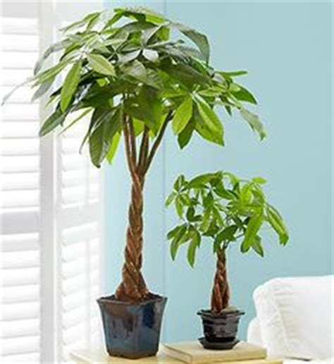 money plant in bathroom plants other things on pinterest 105 pins