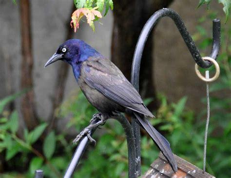urban safari rainydaybirds rainydaymagazine