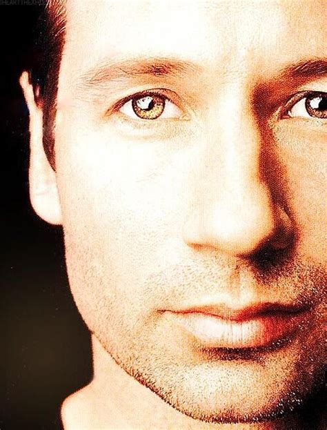 Oh That David Duchovny by 25 Best Ideas About David Duchovny On David