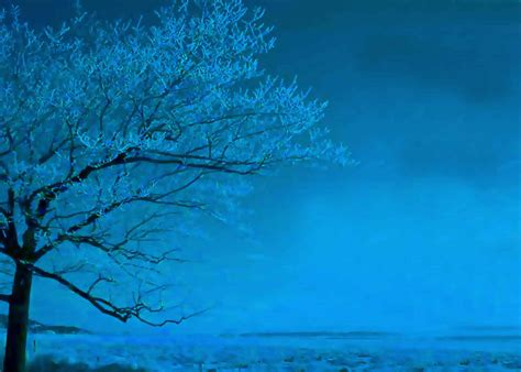 beautiful nature scenery blue tree