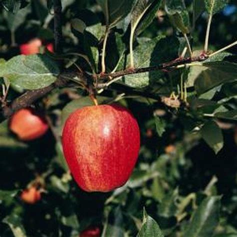 spraying fruit trees 25 best ideas about organic pesticides on