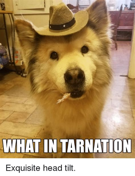 what in tarnation exquisite head tilt head meme on sizzle