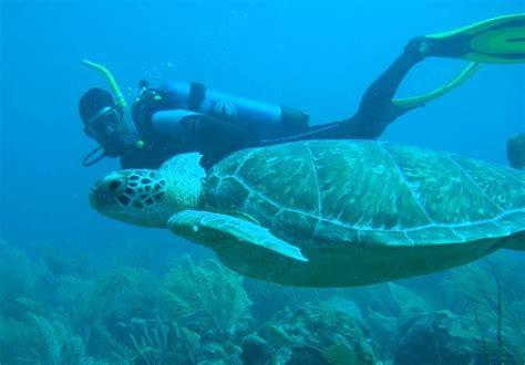 dive barbados diving barbados barbados barbados blue