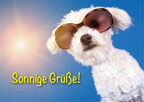 postkarte grusskarte kleiner weisser hund mit sonnenbrille