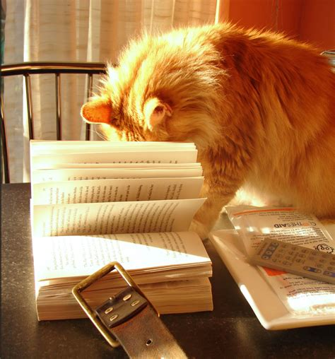 cats and books file cat with book 2320356661 jpg wikimedia commons