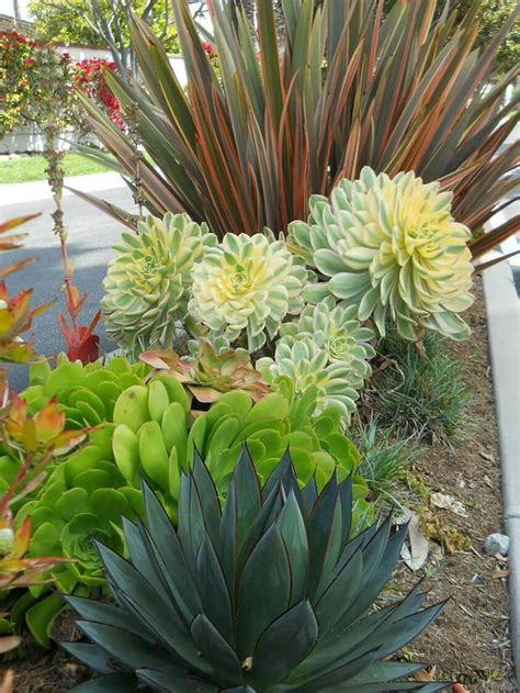 201 best images about combinations shrubs on pinterest