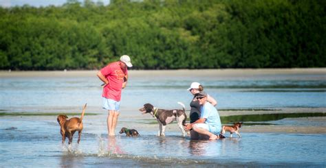 beaches where dogs are allowed park directions info must do visitor guides