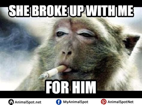 Monkey Face Meme - funny monky pictures wallpaper hd