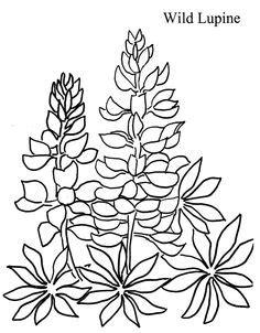 6 images of bluebonnet coloring page bluebonnet plant