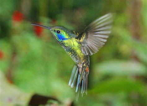 brain soul energy uniknya kolibri