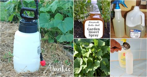 homemade insecticides    garden pest