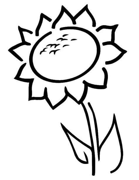 sunflower coloring pages preschool the sunflower is yellow coloring pages