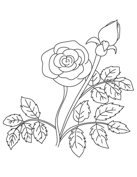coloring page flower bud flower bud coloring pages