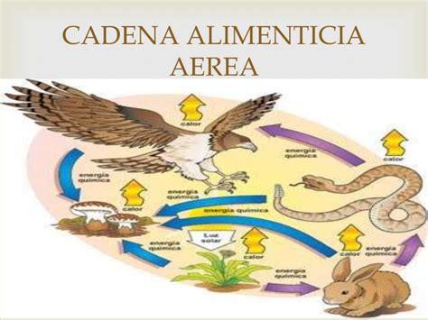 cadena alimenticia acuatica y terrestre wikipedia cadenas alimenticias