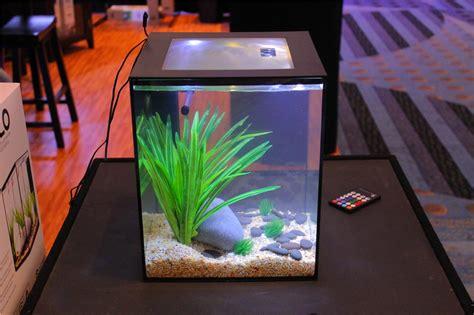 aquarium design usa current usa solo 5 gallon aquarium w full led lid