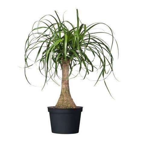 piante in vaso da interno come ottenere anche in appartamento piante da vaso