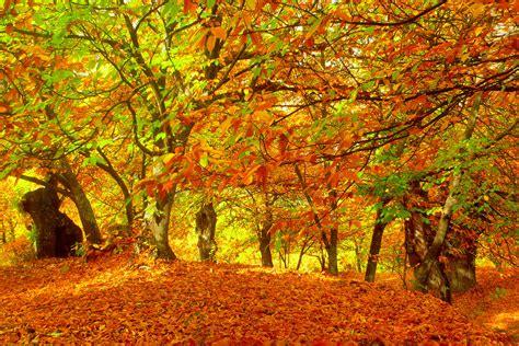 imagenes de otoño invierno oto 241 o taringa