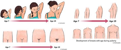 female puberty becoming a girl pin female puberty breast image search results on pinterest