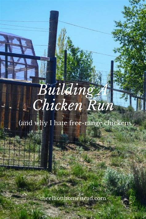 building a run building a chicken run and why i free range chickens the elliott homestead