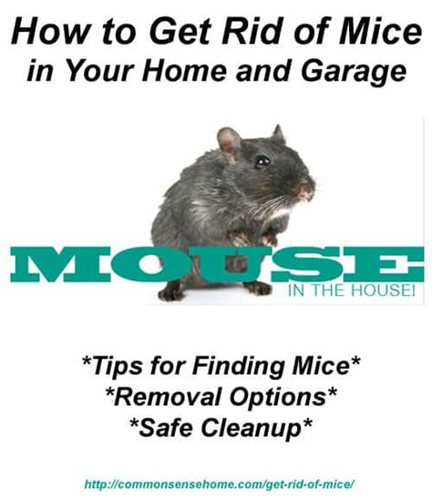 how to keep mice out of your house how to get rid of mice in your home and garage