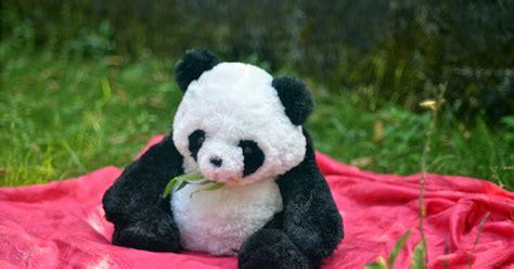 gambar boneka lucu panda endut gambar boneka lucu