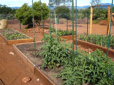 Vegetable Garden Boxes How To Build Vegetable Garden Boxes The Dirt At