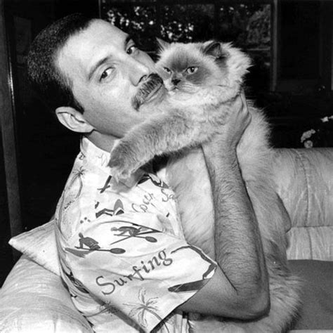 freddie mercury biography imdb 498 best images about celebrities and their pets on