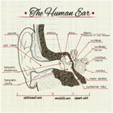 structure de l oreille humaine illustration de vecteur