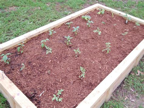 best soil for raised beds raised bed gardening soil gallery outdoor decorations