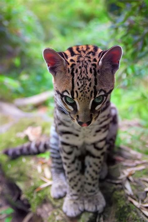 s leopard best 25 baby leopard ideas on adorable baby