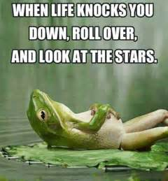 Life Quote Memes - when life knocks you down
