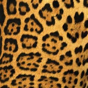 Jaguar Spot Jaguar Spots 12x12 Scrapbooking Paper