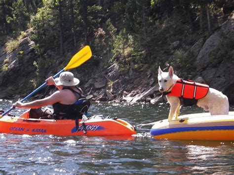kayak for dogs do you paddle with your k 9 kayaking kayak photography