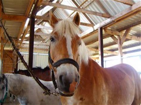 stall pferd pin pferd im stall zum ausmalen stute on