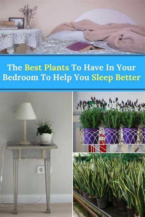 good plants to have in your bedroom the best plants to have in your bedroom to help you sleep