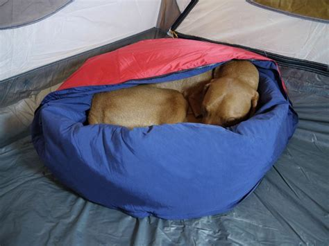 dog sleeping on bed 909 best images about cing on pinterest tent cing