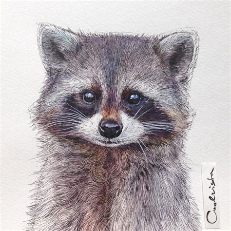what color are raccoons best 25 raccoon ideas on