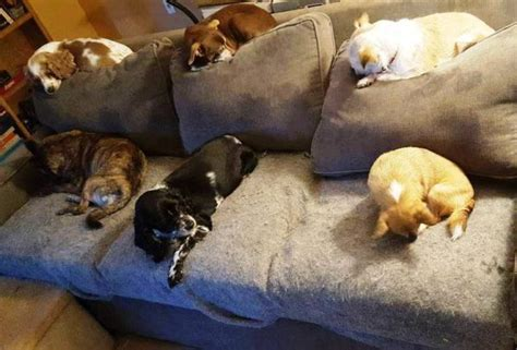 dogs on couch love never grows old at old friends senior dog sanctuary