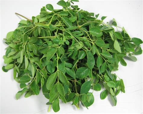Teh Moringa how to eat moringa leaf powder