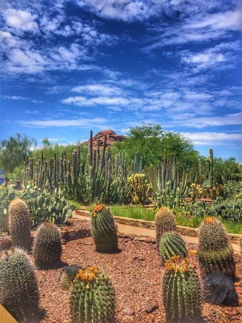Desert Botanical Garden Gift Shop Desert Botanical Garden Gift Shop Az Trover
