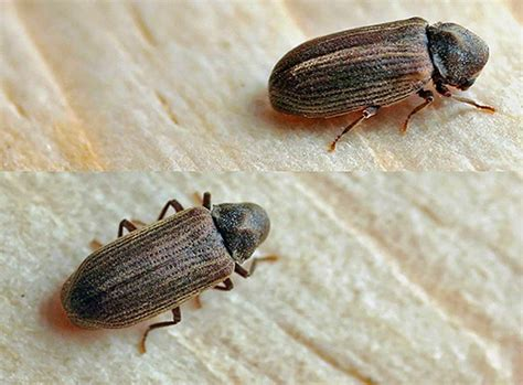 insetti appartamento piccoli insetti nell appartamento e le loro foto