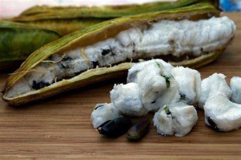 Bibit Jambu Air Bira Bira tanaman buah yang enak dan unik mediatani
