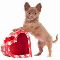 Valentine Pet Love On Pinterest  Valentines Pets And Day