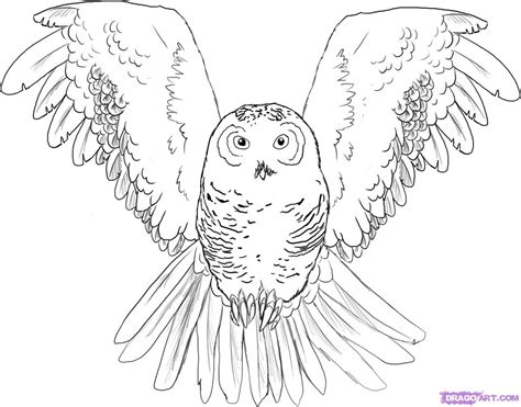easy owl coloring page how to draw an owl step by step birds animals free